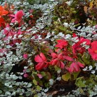 Kolory na początku jesieni.