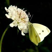 Kwiat i motyl:)