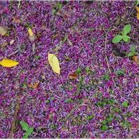 Kwiatowy dywan...