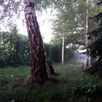 Leśny zakątek ...1 :)