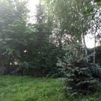 Leśny zakątek ...2 :)
