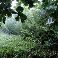 Leśny zakątek ...3 :)