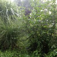 Leśny zakątek ...5 :)