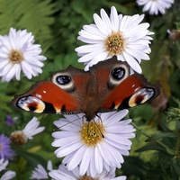 Motylek 1 ,