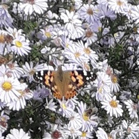 Motylek 2 ,