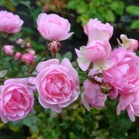 Na różowo pożegnam dzień :)