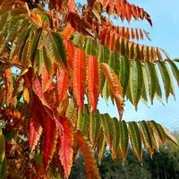 Październik w kolorach:)