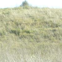 Posiwiała łąka po horyzont .