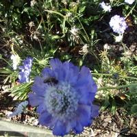 Taka niebieskość sobie kwitnie.
