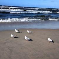 Światowy Dzień Ptaków