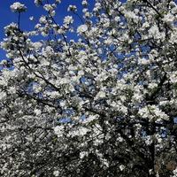 wspomnienie wiosny :)