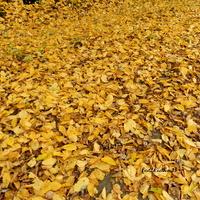 Złota jesień