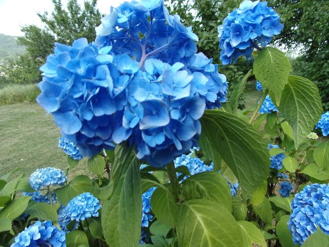 A może być błękit już dziś ?