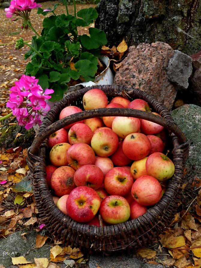 Jesień w koszyku