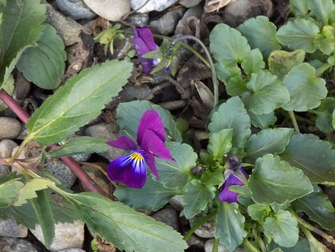 Jeszcze z ogródka :)