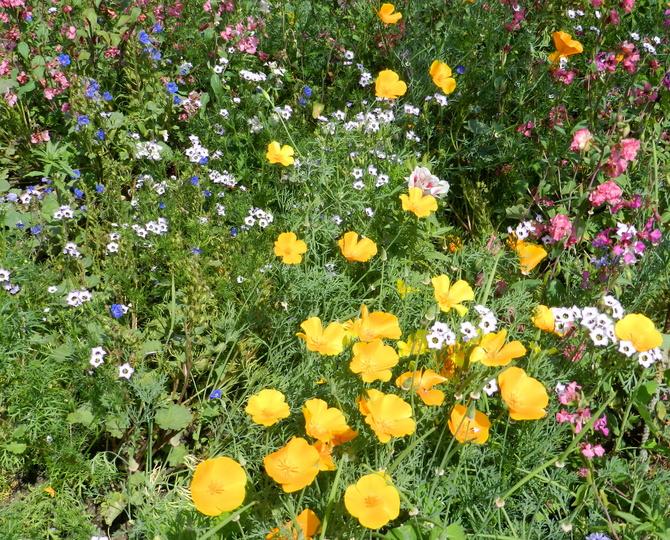Łąka kwiatowa