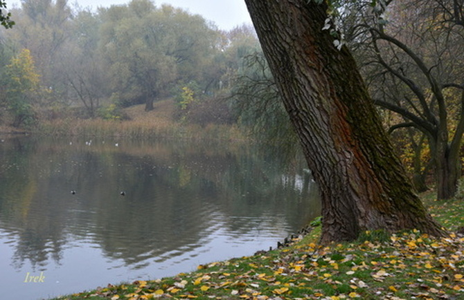 Mgła w parku