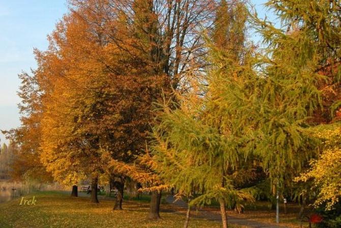 Urocza jesień w parku