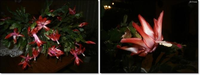 Wieczór na różowo...