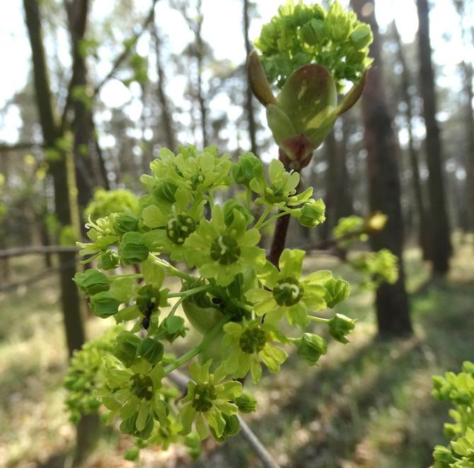 Wiosnę można też spotkać w lesie :)