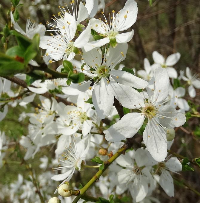 Wiosna w sadach