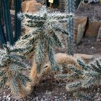 Ciekawy kaktus w szklarni