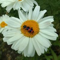 Ciekawy owad