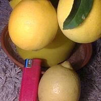Cytryny na drzewku