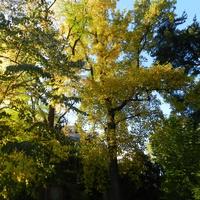 Drzewa jesienią zachwycają nas kolorami
