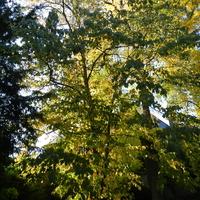 Drzewa w jesiennych kolorach