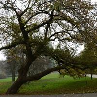 Drzewo, które nie poddaje się od kilkunastu lat