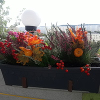 Jesień balkonowa