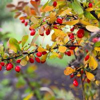 Jesienne barwy w ogrodzie