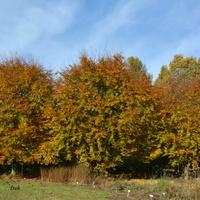 Jesienne drzewa w O B w Powsinie