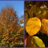 Jesienne drzewo i jego liść w ogrodzie botan.