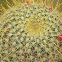 Jest i kaktus :)