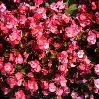kwiatki w parku