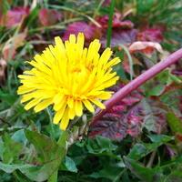 Kwiatuszka też spotkałam :)