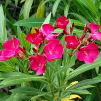 Kwiaty egzotyczne w Monako
