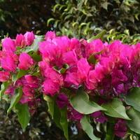 Kwiaty w palmiarni w ogrodzie botanicznym.