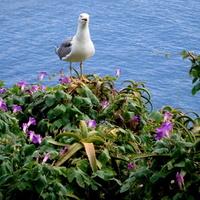 Kwitnące kwiaty i nadmorski ptak