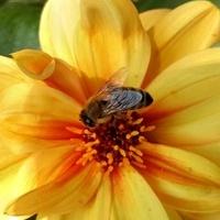 Kwitnące na żółto