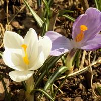 Podobno wiosną tworzą się pary :)
