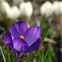 Propozycja Krysi- wiosenne kwiatki, ruszamy :)