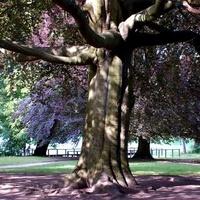 Stare drzewo i młode kwitnące