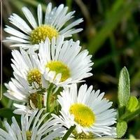 Urok białych kwiatów:)