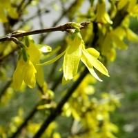 Wiosenne i słoneczne:)