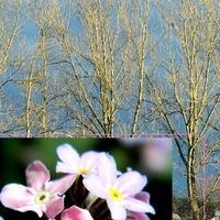 Za oknem jesień, a my mamy wiosnę;)