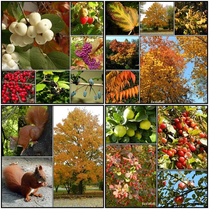 Jesień-wspomnienia.
