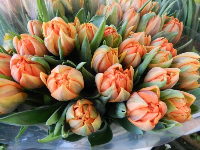 Tulipany pomarańczowe